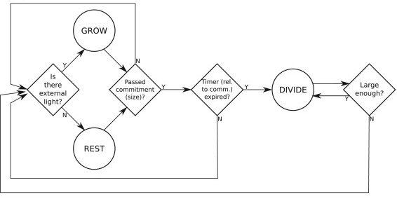 Figure 1A from Shelton et al. 2016. Flowchart showing how cells decide to initiate divisions according to the traditional model. Cells grow until they reach the commitment size and begin dividing when the timer 5-10 hours) has expired.