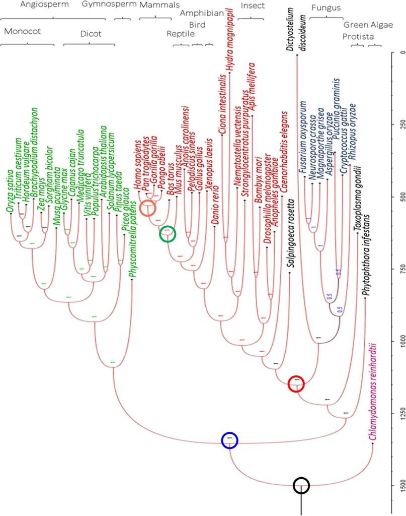 Jayaswal et al. 2017 Figure 7