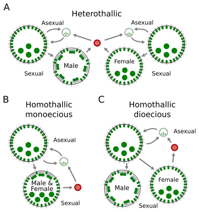 Hanschen et al. Fig. 1