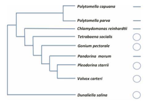 Featherston et al. 2016 Fig. 5