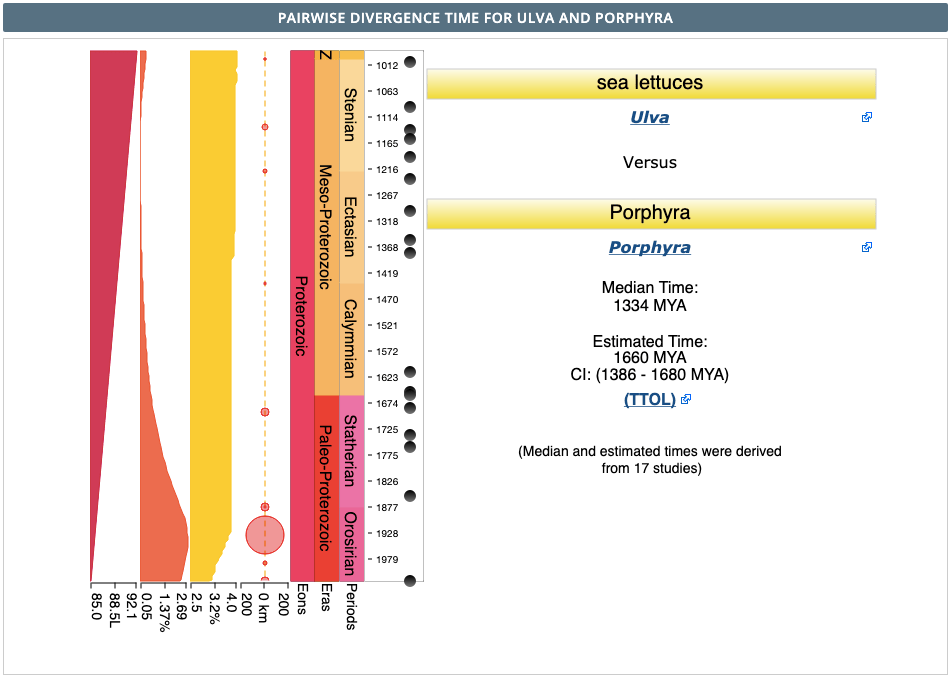 Timetree results Ulva vs. Porphyra