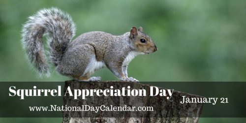 squirrelappreciationday