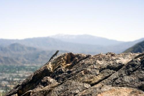 lizardlykkentrailclarke