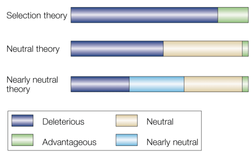 Selectionist, neutral and nearly neutral theories. a | Selectionist theory: early neo-Darwinian theories assumed that all mutations would affect fitness and, therefore, would be advantageous or deleterious, but not neutral. b | Neutral theory: the neutral theory considered that, for most proteins, neutral mutations exceeded those that were advantageous, but that differences in the relative proportions of neutral sites would influence the rate of molecular evolution (that is, more neutral sites would produce a faster overall rate of change). c | Nearly neutral theory: the fate of mutations with only slight positive or negative effect on fitness will depend on how population size affects the outcome.