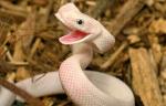 Happy-Snake