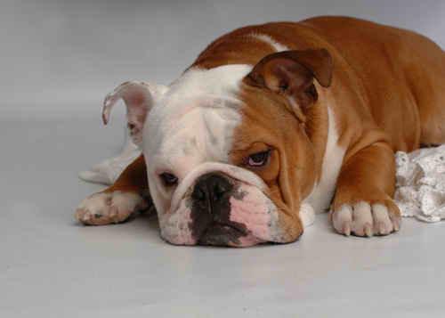 My Nice Doggy