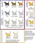 catcolors