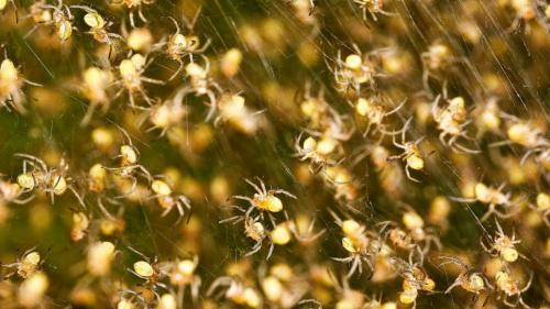 baby_spiders