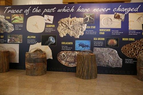 oktarfossils