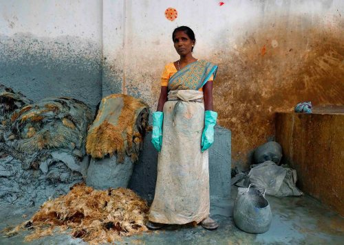 Women pluck hair by hand from goat hides soaked in an alkaline solution to loosen the fibers. This woman  protects herself with gloves and a sheet of plastic wrapped around her sari as she works at a tannery outside Vaniyambad in the Vellore district of Tamil Nadu, India.