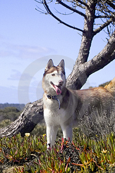 Free Stock Image - Dog and tree