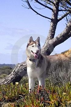 Free Stock Image - Dog and tree