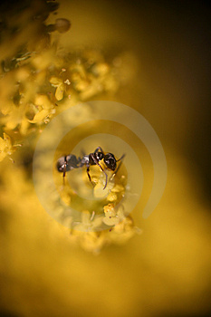 Free Stock Image - Macro. Ant