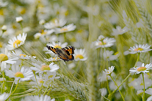 Stock Photos - Butterfly