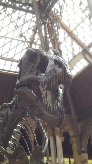 Oxford Natural History Museum Review