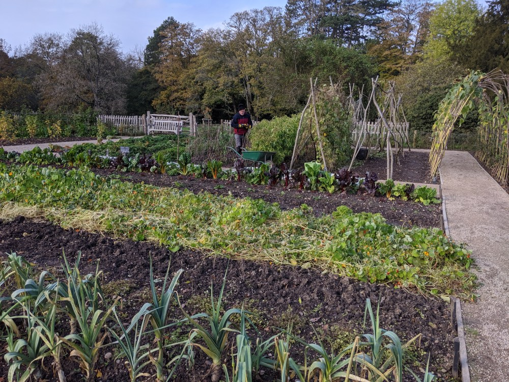 Vegetable Garden | National Trust | Free Time with the Kids