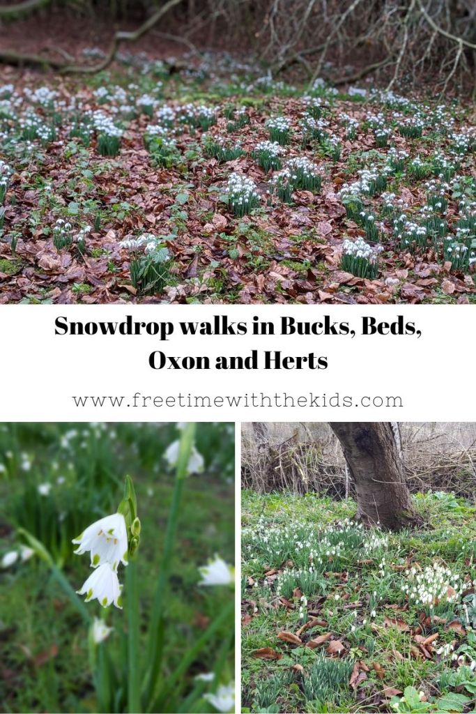 Snowdrop walks in Buckinghamshire, Herfordshire, Bedfordshire and Oxfordshire | Free Time with the Kids