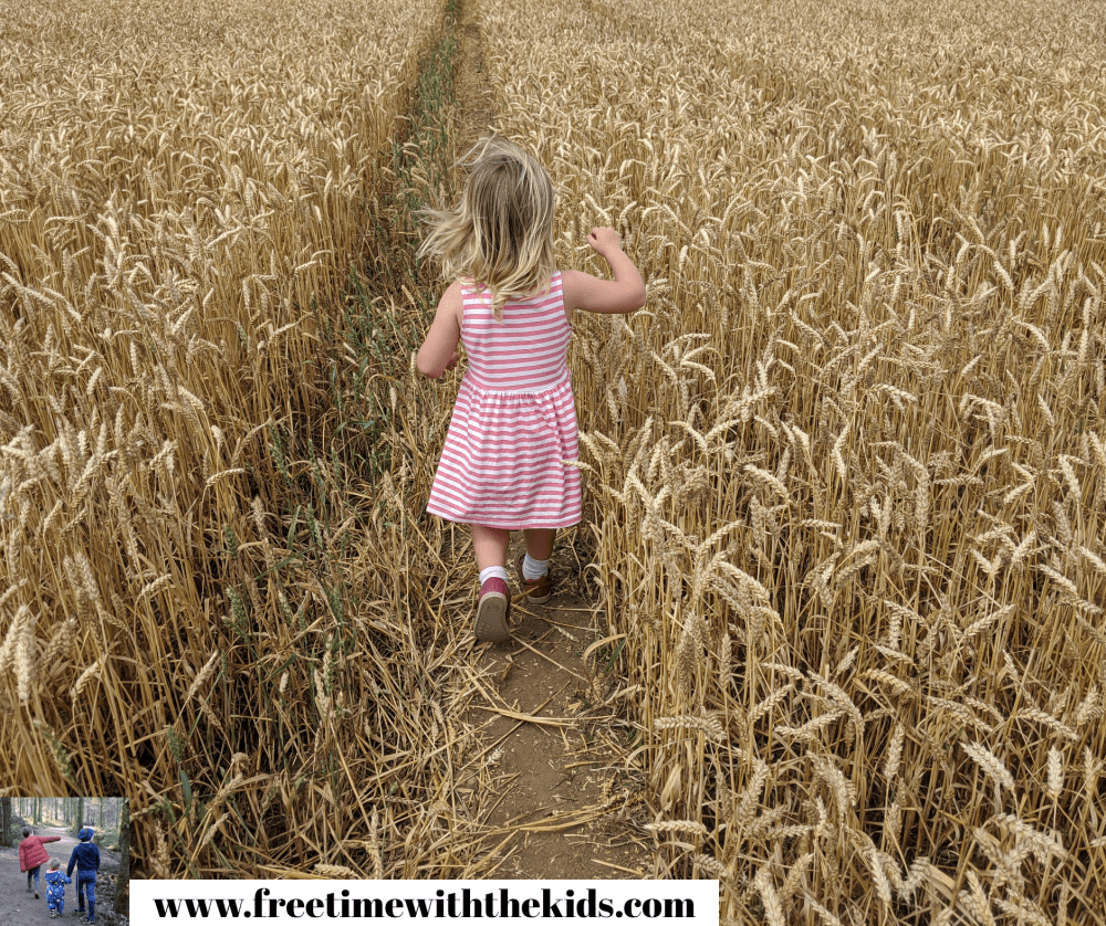 Sunflower field at The Patch MK | Milton Keynes, Buckinghamshire | Review by Free Time with the Kids | Things to do in the summer holidays