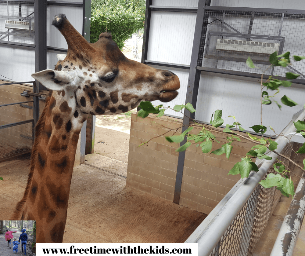 Cotswold Wildlife Park Review | Review by Free Tie with the Kids | Burford, Oxfordshire | Family zoos