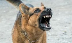 Angry Dog Sound Effect