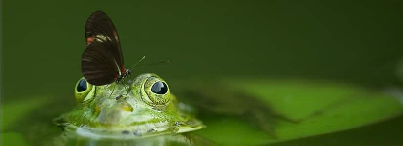 free frog sound effects
