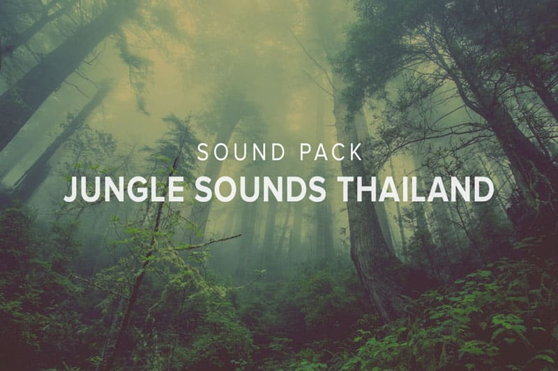 jungle sounds thailand