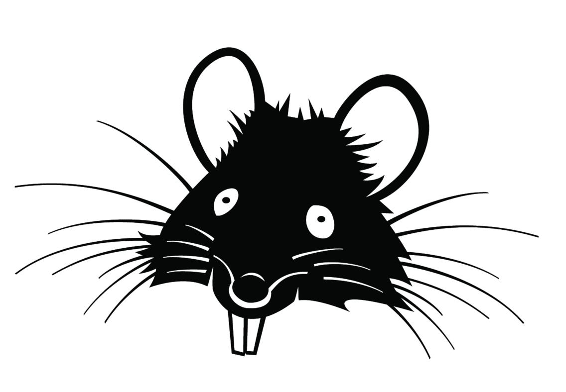 Rat Vector Vp