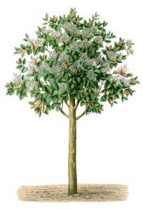 whimsical tree 1
