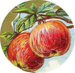 Free vintage apple illustration