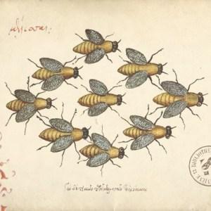 A vintage scientific illustration of honey bees.