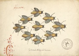 A vintage scientific illustration of honey bees.