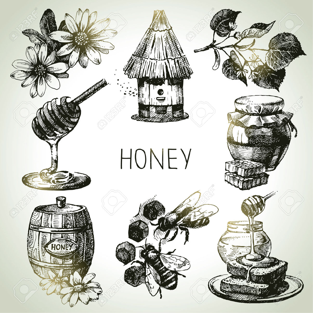 A group of vintage bees and honey illustrations for inspiration!