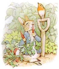 Public domain children's book illustration of Peter Rabbit