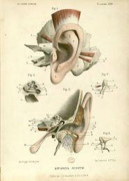 Le corps humain, structure et fonctions Edition : Paris : J.-B. Baililère, 1879
