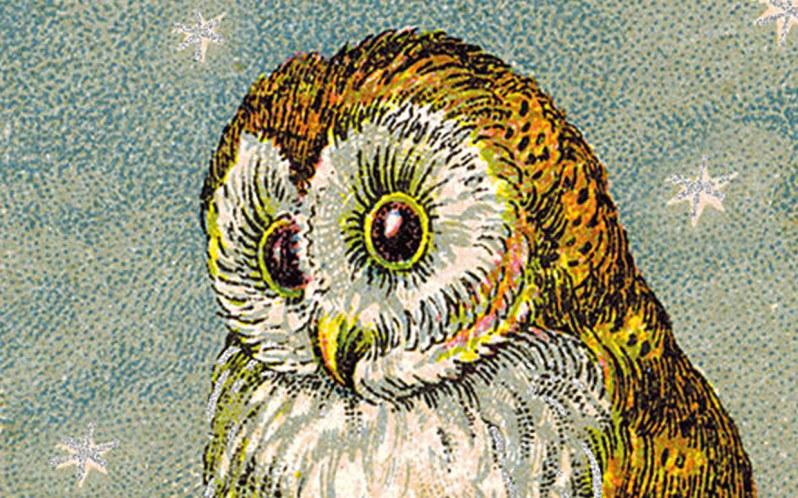 public domain vintage owl image 7