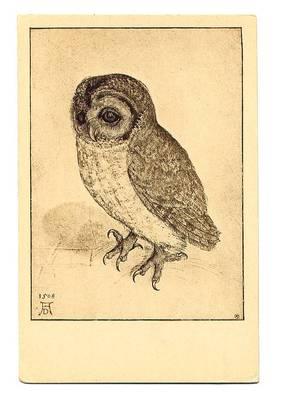public domain vintage owl image 8