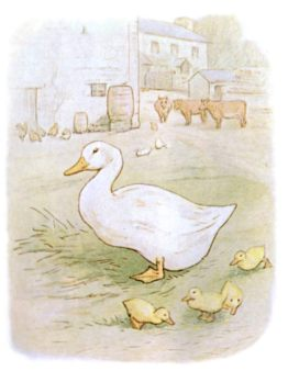 Public Domain vintage children's book illustration of a mother duck and ducklings from Beatrix Potter