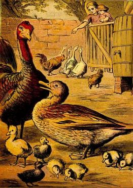 Public domain vintage childrens book illustration of The Ugly Duckling