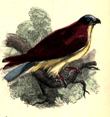 public domain bird illustration vintage childrens books