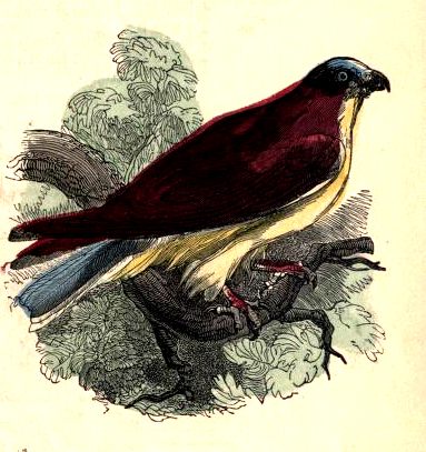 public domain bird illustration vintage childrens books