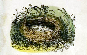 public domain birds nest illustration from vintage childrens books