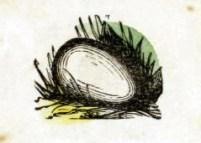 public domain egg illustration vintage childrens books