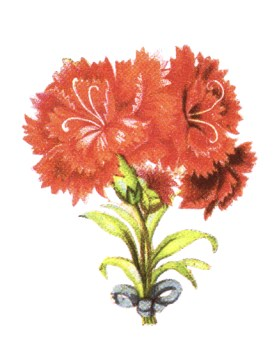 public domain vintage clipart floral bouquet red flowers