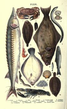 A free public domain vintage illustration of fish from cooking book