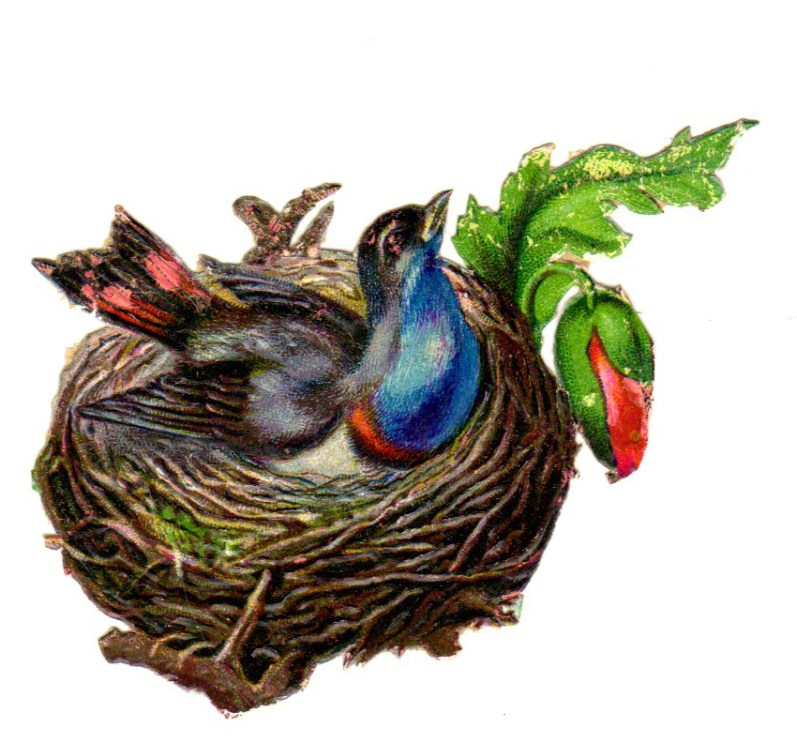This is a copyright-free vintage illustration of a colorful bird and Its birds nest