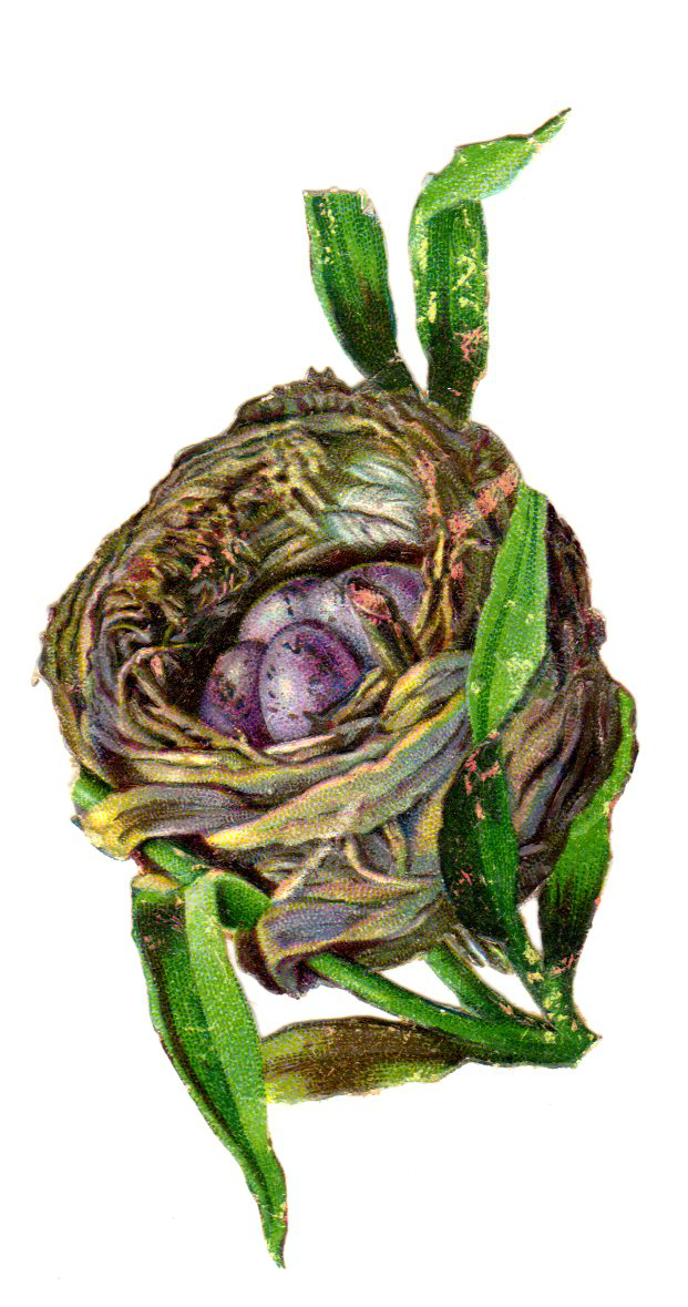 This is a copyright-free vintage illustration of a birds nest with purple eggs