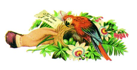 This is a copyright-free vintage illustration of a parrot with its birds nest and eggs