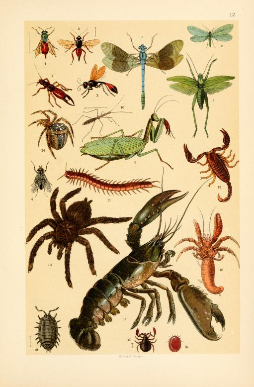 These are free vintage illustrations of spiders and more wild insects from an 1895 out of copyright science book for kids
