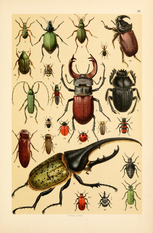 These are free vintage illustrations of Wild Insects from a 1895 out of copyright science book, A Popular History of Animals for Young People