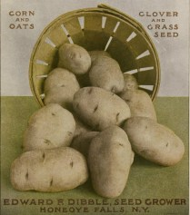 free vintage illustration of potato advertisement1